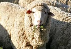 Suriye krizi nedeniyle hastalıklı etler soframıza girdi