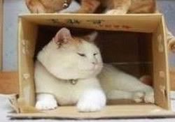 Kedilerin burada neden çok mutlu