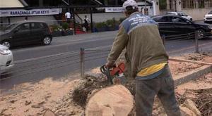 MADO'daki ağaçlar neden kesildi