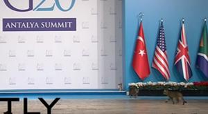G-20'yi bastılar