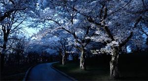 Geceleri ağaçlara ne oluyor