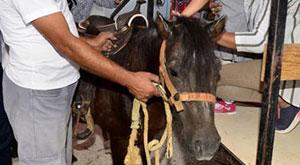 Fethullah'ın atları ne oldu