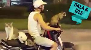 Adnan Hoca'nın kedicikleri out, Motorcu kediler in