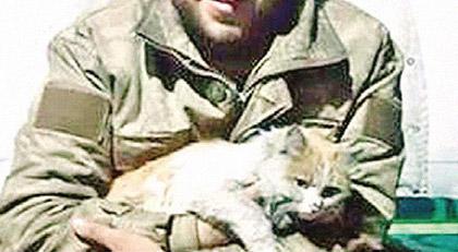 El Bab kedisi Barış yuvasında