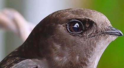 Nadir görülen o kuşu bakın nerede buldular