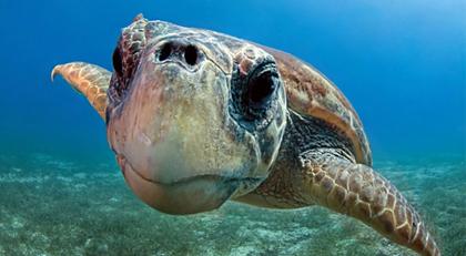 Kaplumbağalar turistleri neden ısırdı