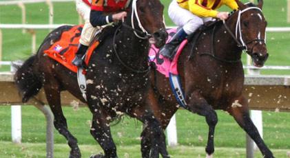 Yoksa yarış atları...