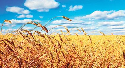 """Silin kitaplardaki """"tarım ülkesiyiz"""" sözünü"""