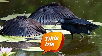 Ramazan'da saklanrak su içen kuş