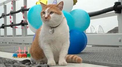Maskot kediye doğum günü