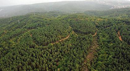 Türkiye'de ormanlar alarm veriyor