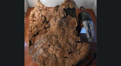 Araba büyüklüğünde fosil bulundu
