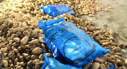 Niğde'ye Mısır'dan ithal edilen patates getirildi
