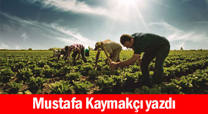 Tarımı çökerten politikanın arkasında hangi zihniyet var