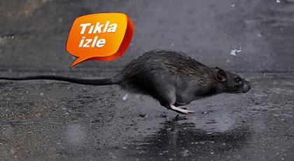 Korona fareleri nasıl vurdu
