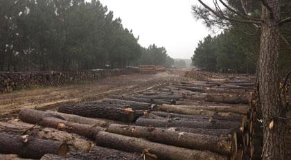 Meğer İstanbul'daki orman neden kesiliyormuş