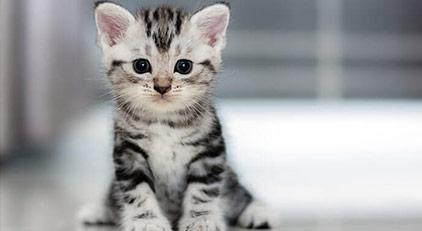 Emsal olacak kedi kavgası