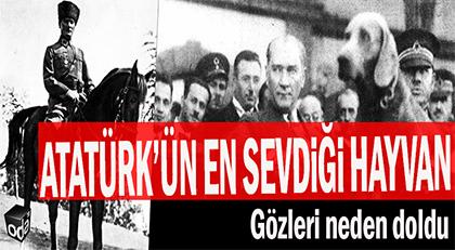 Atatürk'ün en sevdiği hayvan