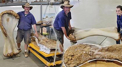 Kıtada yaşamış en büyük dinozor keşfi
