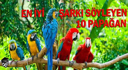 En iyi şarkı söyleyen 10 papağan