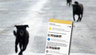 Zaytung haberi değil gerçek: Polis köpeklerden korktu Başkan ifade verdi